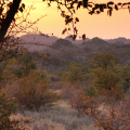 Mapungubwe-Private-Nature-Reserve-3